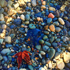 Seaside Jelly by Kirsty Nicole - Nature Up Close Rock & Stone ( water, waterscape, stone, ocean, seaside, leaves, washington, nature, autumn, fall, nature up close, rocks, jellyfish )