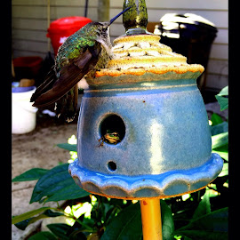 The humming bird and tree frog by Grace Grantham - Instagram & Mobile iPhone ( hummingbird )