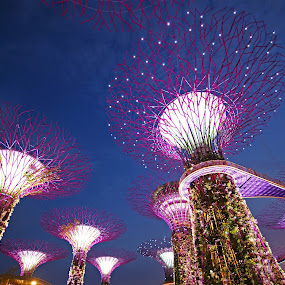 Night at Garden by the Bay by Mulawardi Sutanto - City,  Street & Park  Night ( garden by the bay, park, night, travel, singapore )