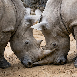 Face off by Rodney Rodriguez - Animals Other Mammals