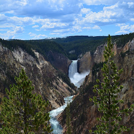 Grand Canyon YNP by Angie Arnold - Landscapes Travel ( waterfall, yellowstone national park, landscape, grand canyon )