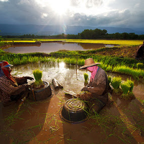 Thai farmers ii by Jeerasak Chaisongmuang - People Group/Corporate