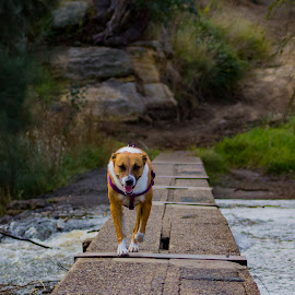 PUPPY FUN by Kathryn Bisley - Animals - Dogs Running ( animals, dogs playing, action, dogs running, nature up close, dog portrait, landscapes,  )