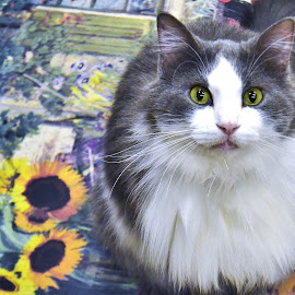 Boots and Sunflowers by Tim Hall - Animals - Cats Portraits