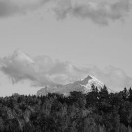 Pilchuck  by Todd Reynolds - Black & White Landscapes