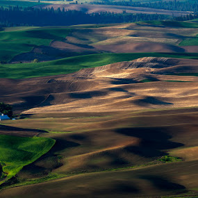 Palouse, WA by Peter Cheung - Landscapes Mountains & Hills