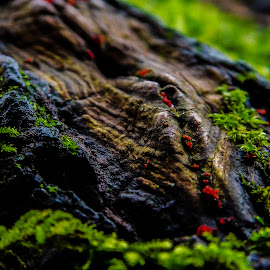 Follow the Path by Kathryn  Rohde - Nature Up Close Trees & Bushes ( cool, tree, wood, green, moss )