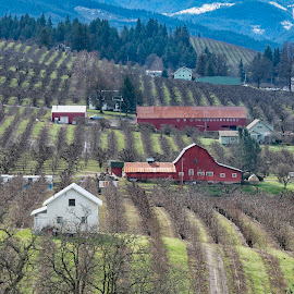 Red barn by Chris Bartell - City,  Street & Park  Vistas ( 2018, march, hood river, hood, river )