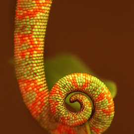 chamelion's tail by Lize Hill - Animals Other (  )