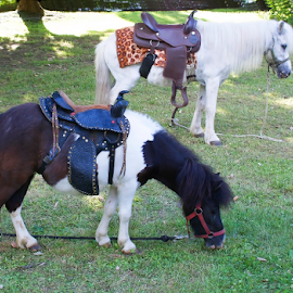 by Branka Radmanić - Animals Horses