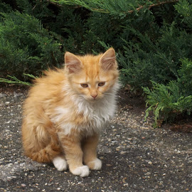 Коте by Georgi Kolev - Animals - Cats Portraits ( храсти., път., коте., зелено., цветове. )
