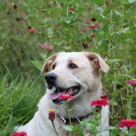 by Rebecca Mosher-Schmidt - Animals - Dogs Portraits