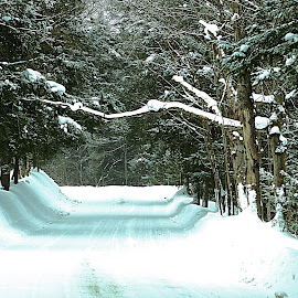 Muskoka Wonderland by Allan Fritz - Landscapes Forests ( winter, snow, trees, forest, photography, roads )