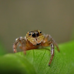 Spider eye by Bhavya Joshi - Animals Insects & Spiders