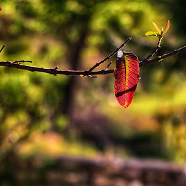 lonely beauty by Kamran Khan - Nature Up Close Leaves & Grasses ( swat photography, beautiful, beauty, leaves )