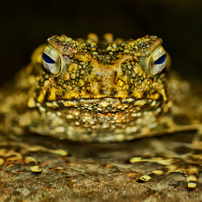 by Charliemagne Unggay - Animals Amphibians (  )