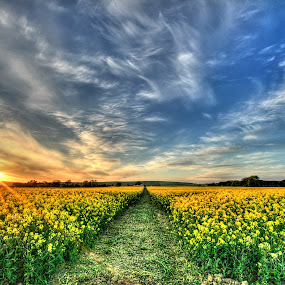 My Way by Jong Onilcny - Landscapes Prairies, Meadows & Fields ( landsape, farms, sunset, sunrise )