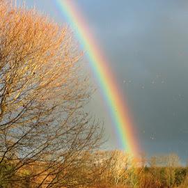 Rainbow in the Field by Roxanne Dean - Landscapes Prairies, Meadows & Fields ( sky, rainbow, hillside, field, trees,  )