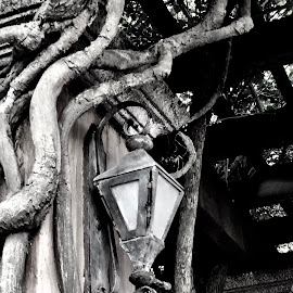 Left Behind by Lorna Littrell - Black & White Objects & Still Life ( spooky, light, rusty, black and white, abandoned )