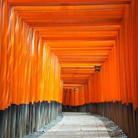 Fushimi Inari Shrine by Paul Atkinson - Landscapes Travel ( religion, orange, structure, shrine, inari, japan, torii, kyoto, shinto, fushimi, gate,  )