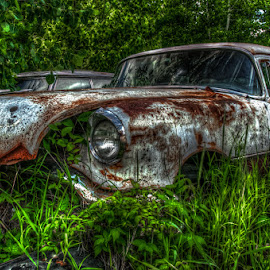 Tin Lizzy by Chris Cavallo - Transportation Automobiles ( car, old car, maine, white, rusty, rust, decay, abandoned )