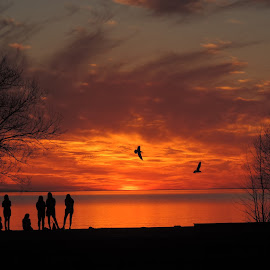 Golden sunset by Beryl Smith - Landscapes Sunsets & Sunrises ( #lake, #goldensky, #birds, #sunset, #silhouettes )