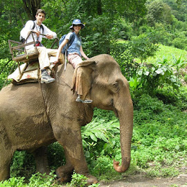 Visit stunning places in Munar by Dream Holidays - Public Holidays Easter ( kerala honeymoon packages from delhi, kerala tour packages from delhi, cheapest kerala tour packages, kerala tour packages with price, kerala travel packages )
