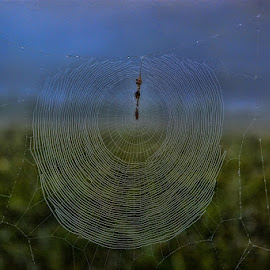 Web in Pasture by Deborah Russenberger - Nature Up Close Webs ( web )