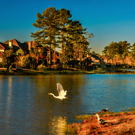 Woodlands Neighborhood by Joseph Law - City,  Street & Park  Neighborhoods ( houses, texas, ducks, lakes, neighborhood, reflections, trees, woodland, geese, waterfront )