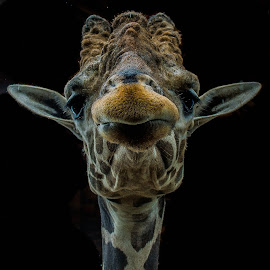 by Samuel DiChiara - Novices Only Wildlife