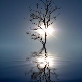 Solitaire silhouette  by Katarina Farelius - Digital Art Places ( #reflect #solitaire #tree #lettgerebelight #paradisbukta #ilovenorway #troms )