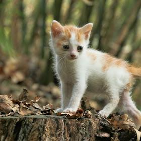 Cute little Tinky.jpg