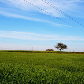 grass and sky !! by Harshit Chawla - City,  Street & Park  Skylines ( #grass #green #sky #blue #amazing #landscape,  )