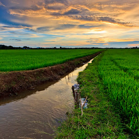 Paddy Field by Tsukiyama Kaminaga - Landscapes Prairies, Meadows & Fields ( field, orange, sky, rice, kedah, green, paddy, sunset, scenery, view, wide, langkawi )
