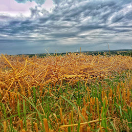 Straw by Zachary Taylor - Instagram & Mobile Android ( clouds, wheat, blue, straw, yelow )