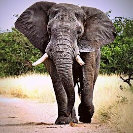 Toll Keeper by Pieter J de Villiers - Animals Other