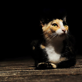 Scraggly Cat by Fergus Ford - Animals - Cats Portraits ( cat, lying, strobist, hard light, beach, ferile, nikon )