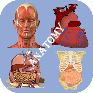 Best Anatomy Learning for Android