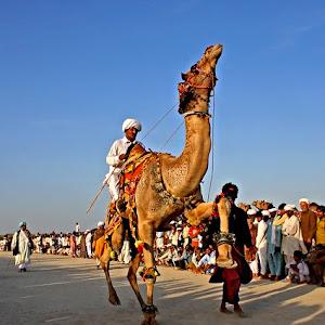 IMG_0507 Camel Dance.jpg