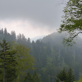 Smokey Mountains by Arunabha Biswas - Landscapes Forests ( tennessee, smokey mountains national park, landscape, gloomy )