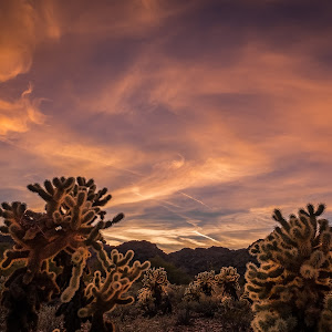 Cholla Sunset at White Tanks 2016-01-21-1-B.jpg