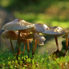 by Ove Andersen - Nature Up Close Mushrooms & Fungi