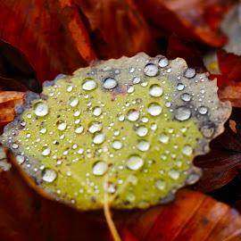 The rain tells a story by Nataliya Kamenova - Nature Up Close Leaves & Grasses
