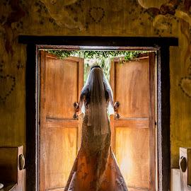 Bride in the door by Nici Pelser - Wedding Bride