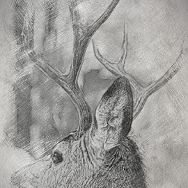 Mr. Big Stuff by Dawn Paul - Abstract Patterns