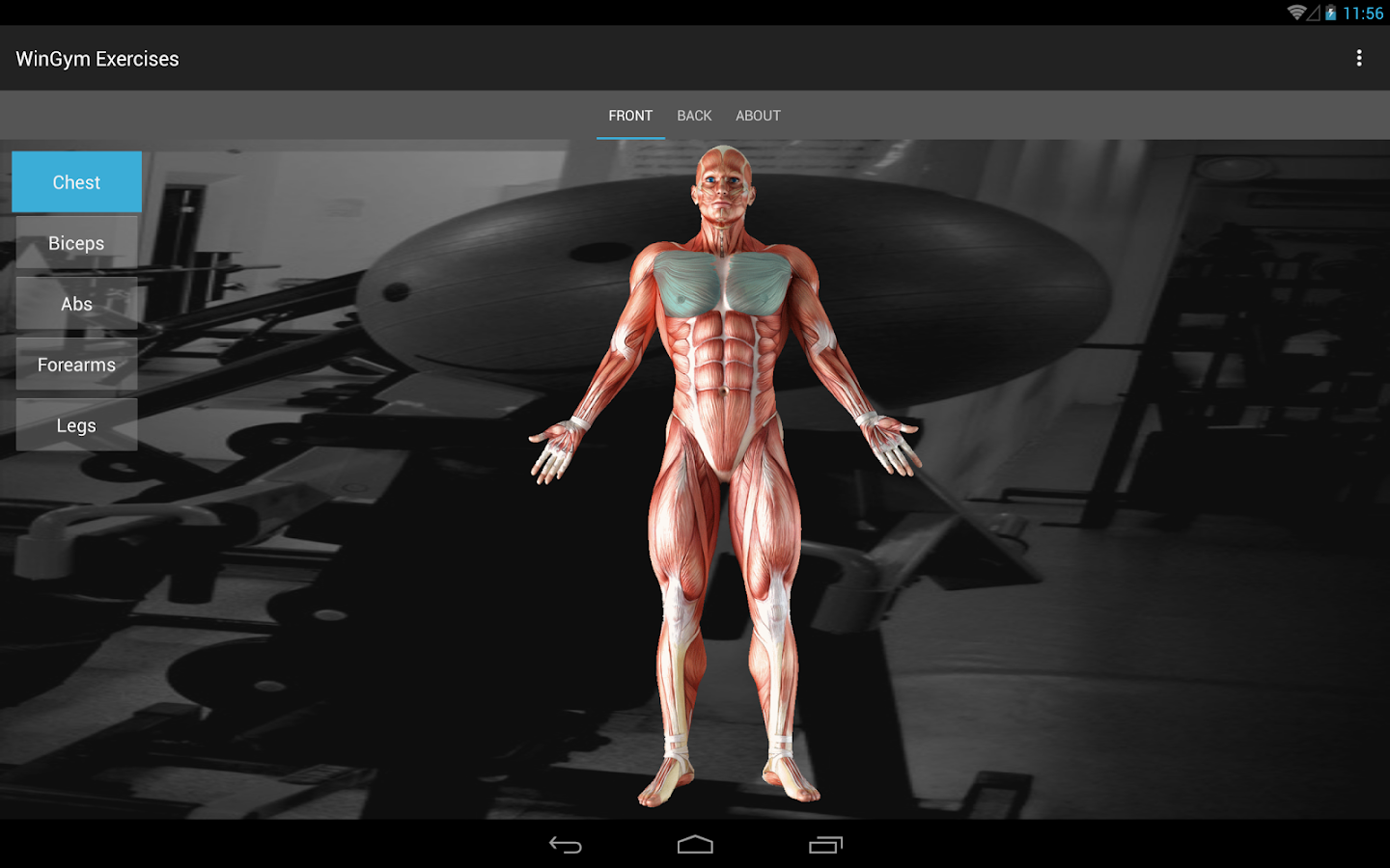WinGym Exercises Premium Screenshot 5
