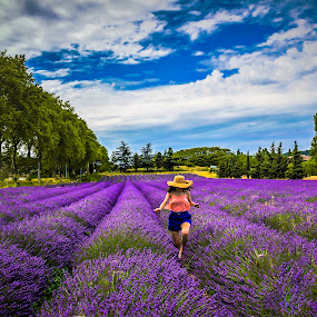 Lavender Field by Arif Sarıyıldız - Landscapes Prairies, Meadows & Fields ( provence, france, avignon, lavander field, lavender )