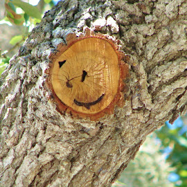 Smiley face by Priscilla Renda McDaniel - Nature Up Close Trees & Bushes ( fresh cut, face, tree, smiley face )