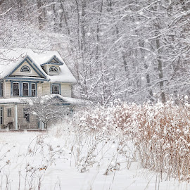 Winter White by Sandra Hilton Wagner - Buildings & Architecture Homes ( grasses, winter scene, winter, snow, white, trees, weather, house, landscape )