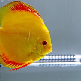 by Kishu Keshu - Animals Fish